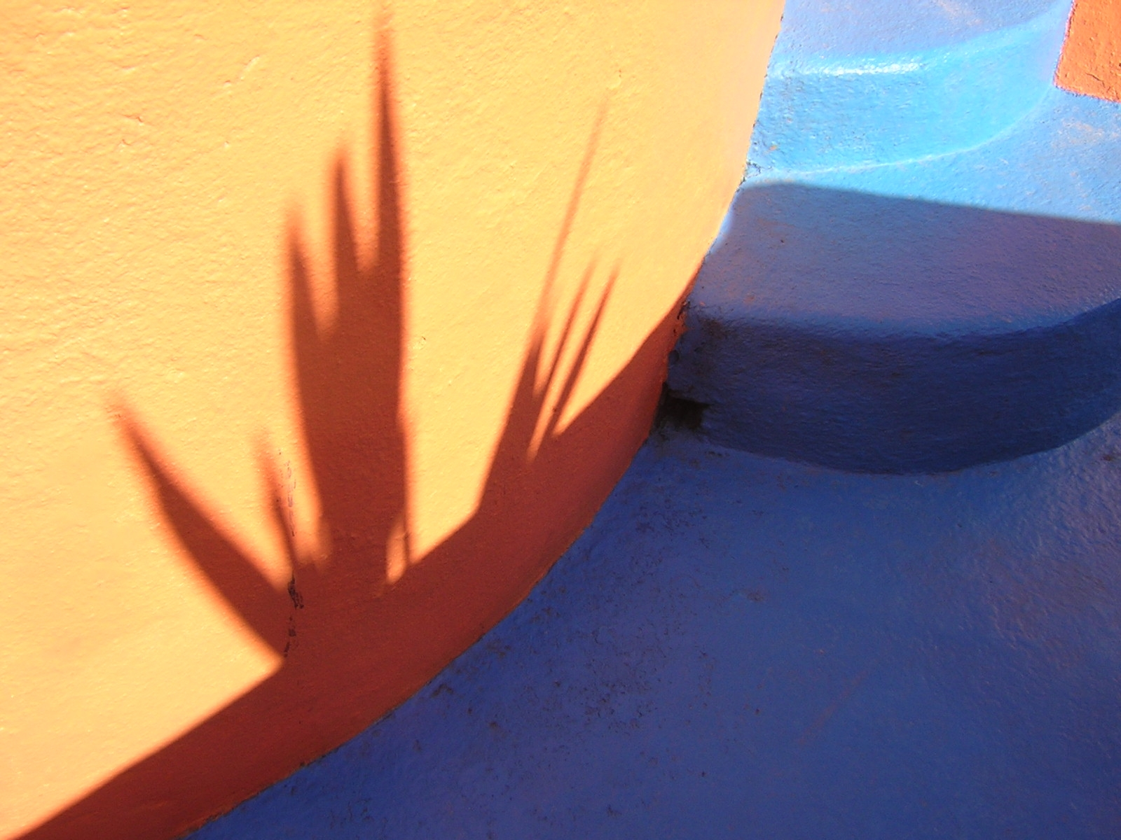 Mexico frond shadow.jpg