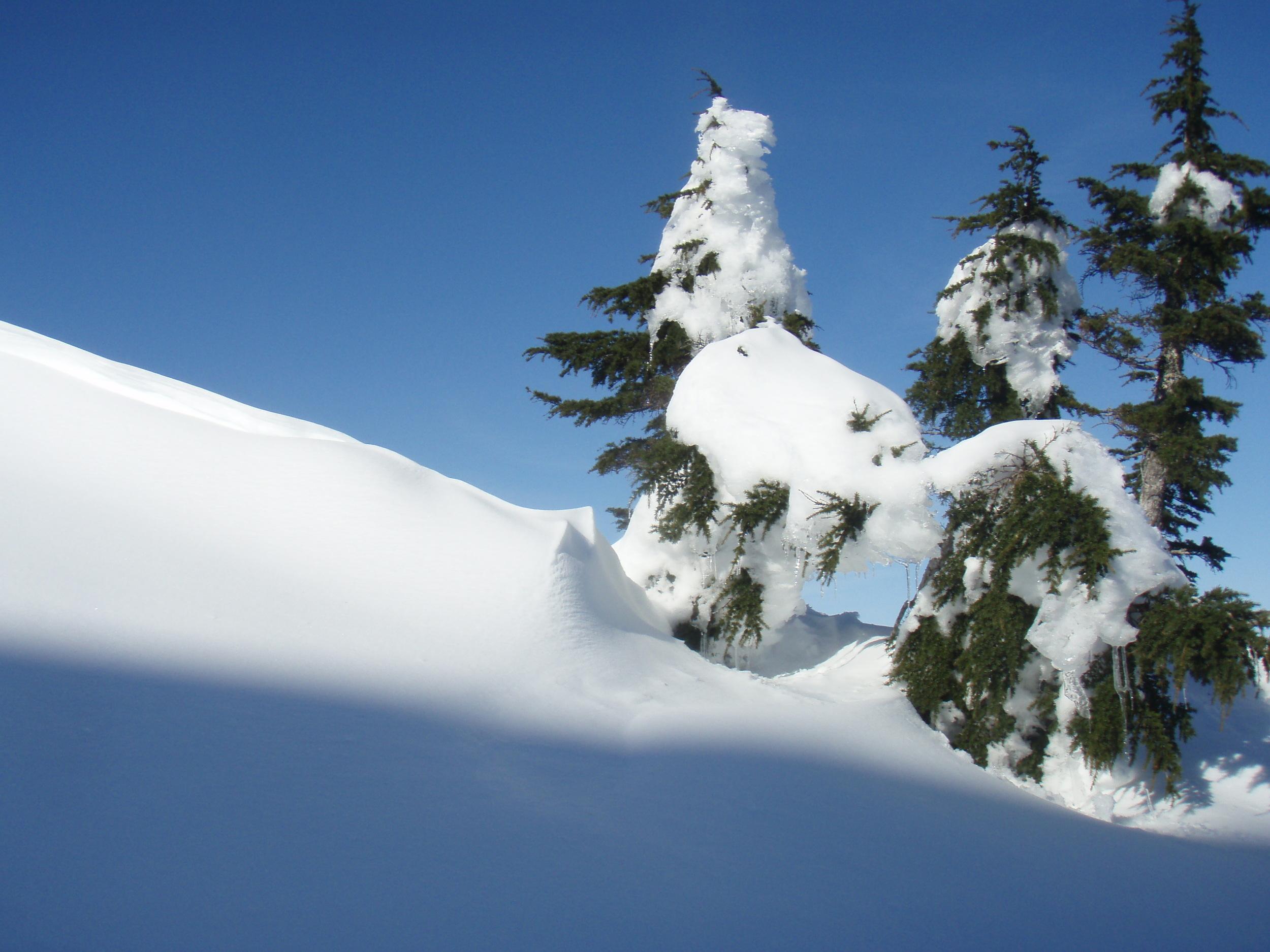 Trees on the ridgetop.jpg