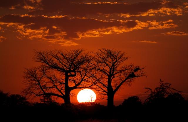 Primal-Pathways-South-Luangwa-Walking-Safari-Baobab-Sunset.jpg