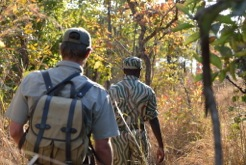 Zambia: back on the trail