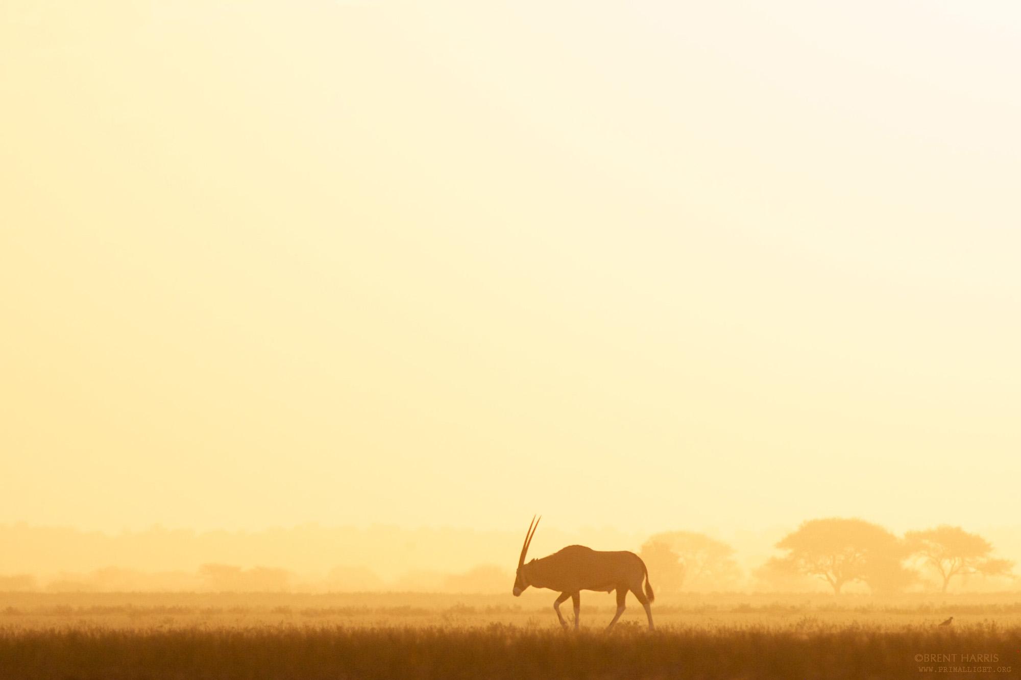 Botswana: Kalahari Desert