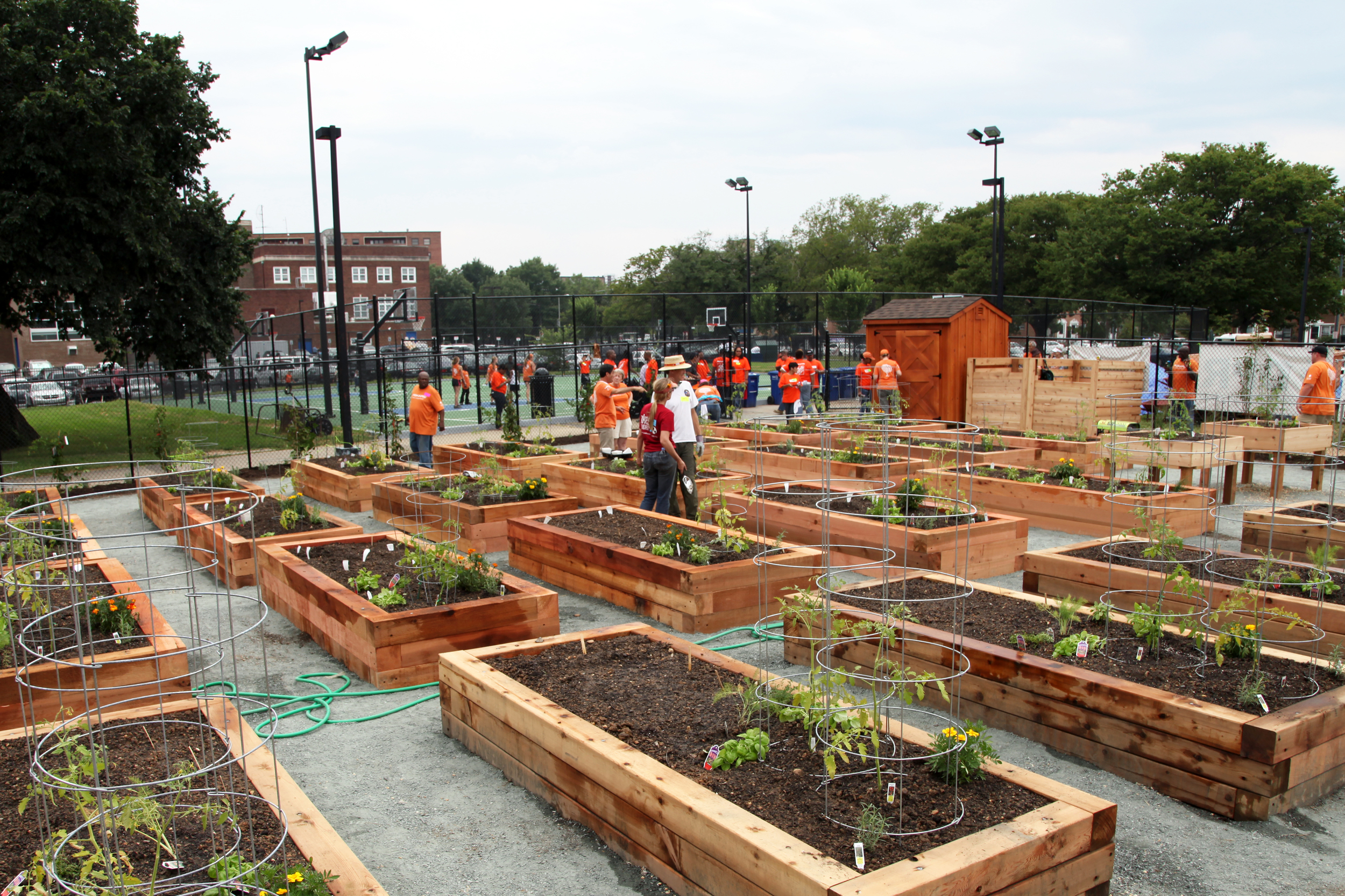 SouthWest DC Community Garden - Washington, DC