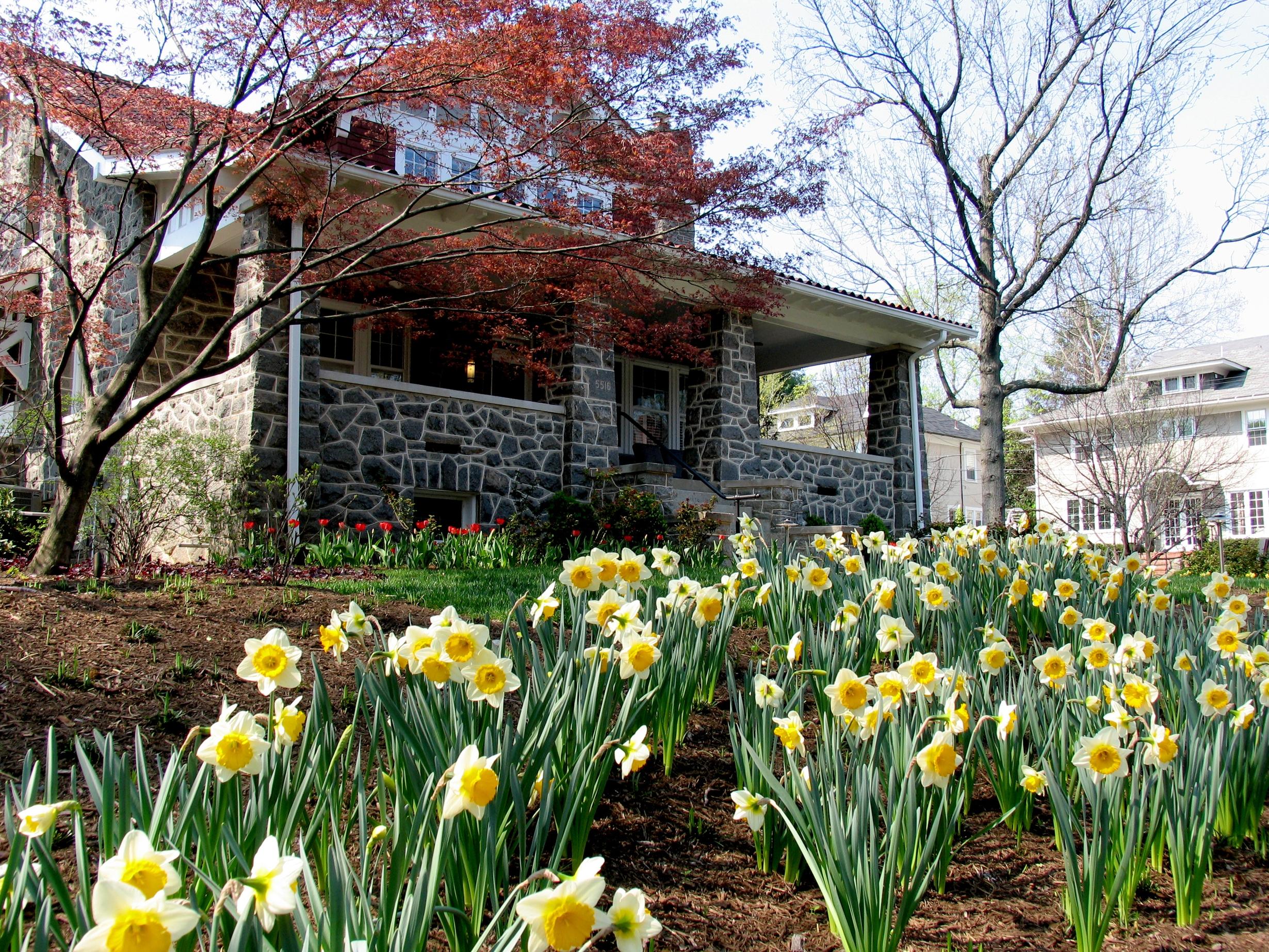 Front Daffodils.jpg
