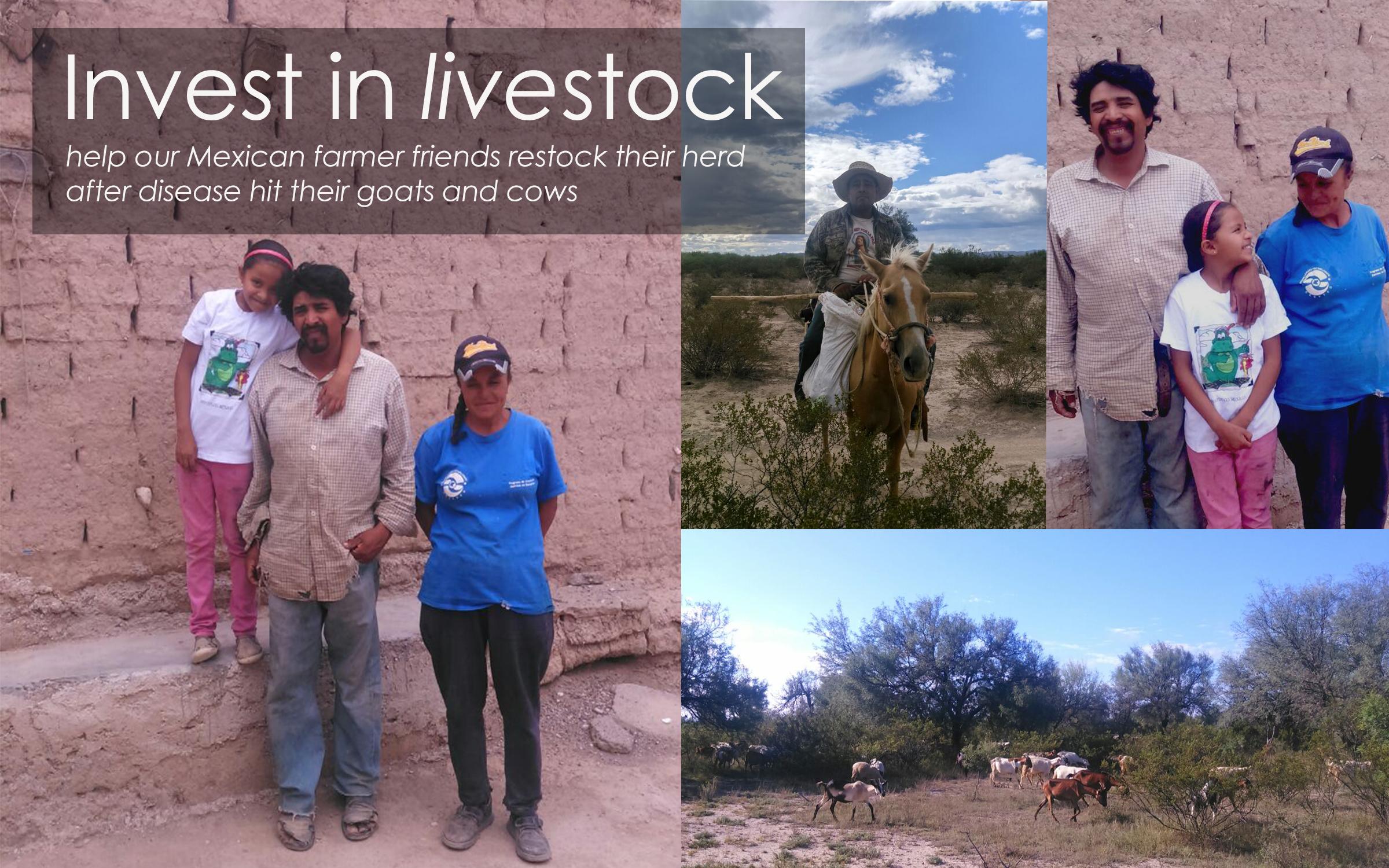 Invest in Livestock.jpg
