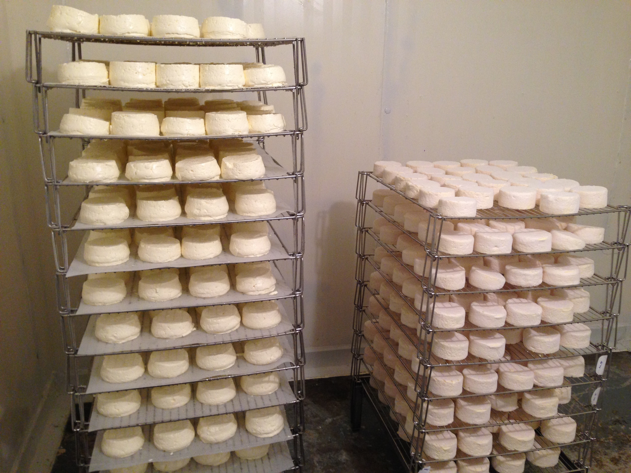 cheese aging.JPG