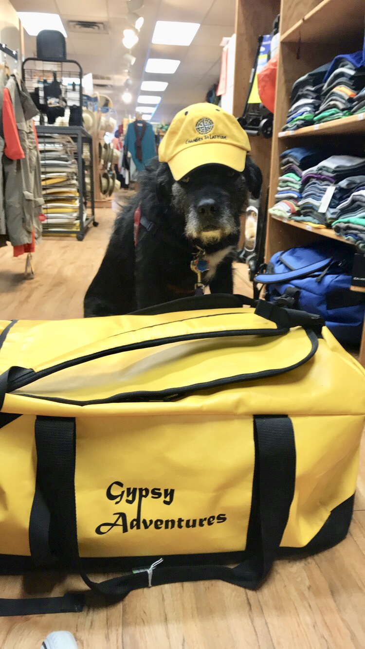 The Boy Himself! Gypsy the shop dog and book keeper (hehe) :)