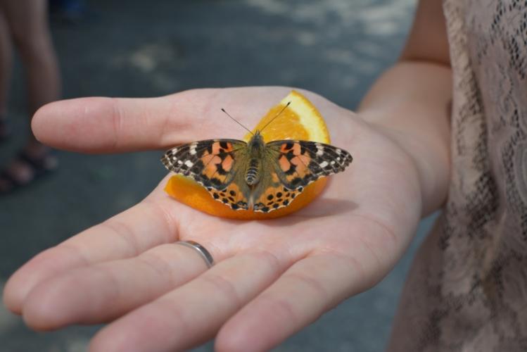 mariposa, ca