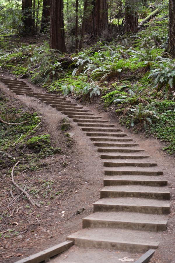 Muir Woods-1.jpg