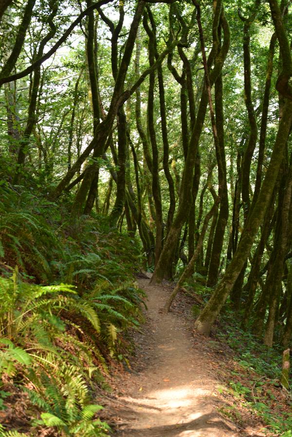 Muir Woods-11.jpg