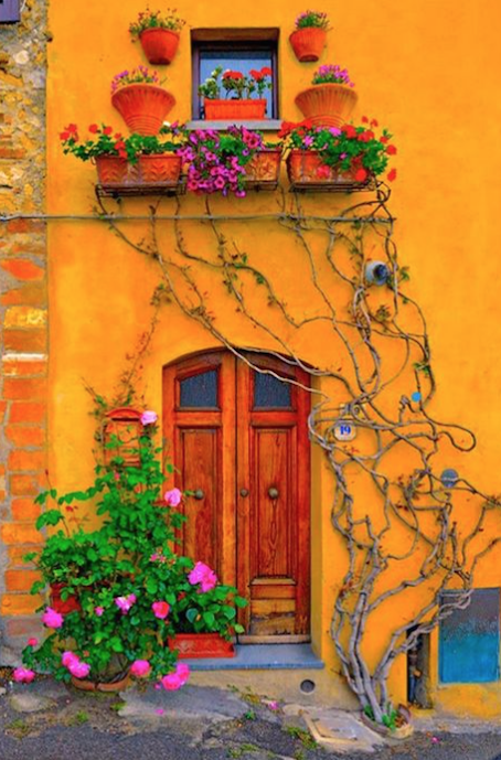image via Potted Plant Society on Pinterest