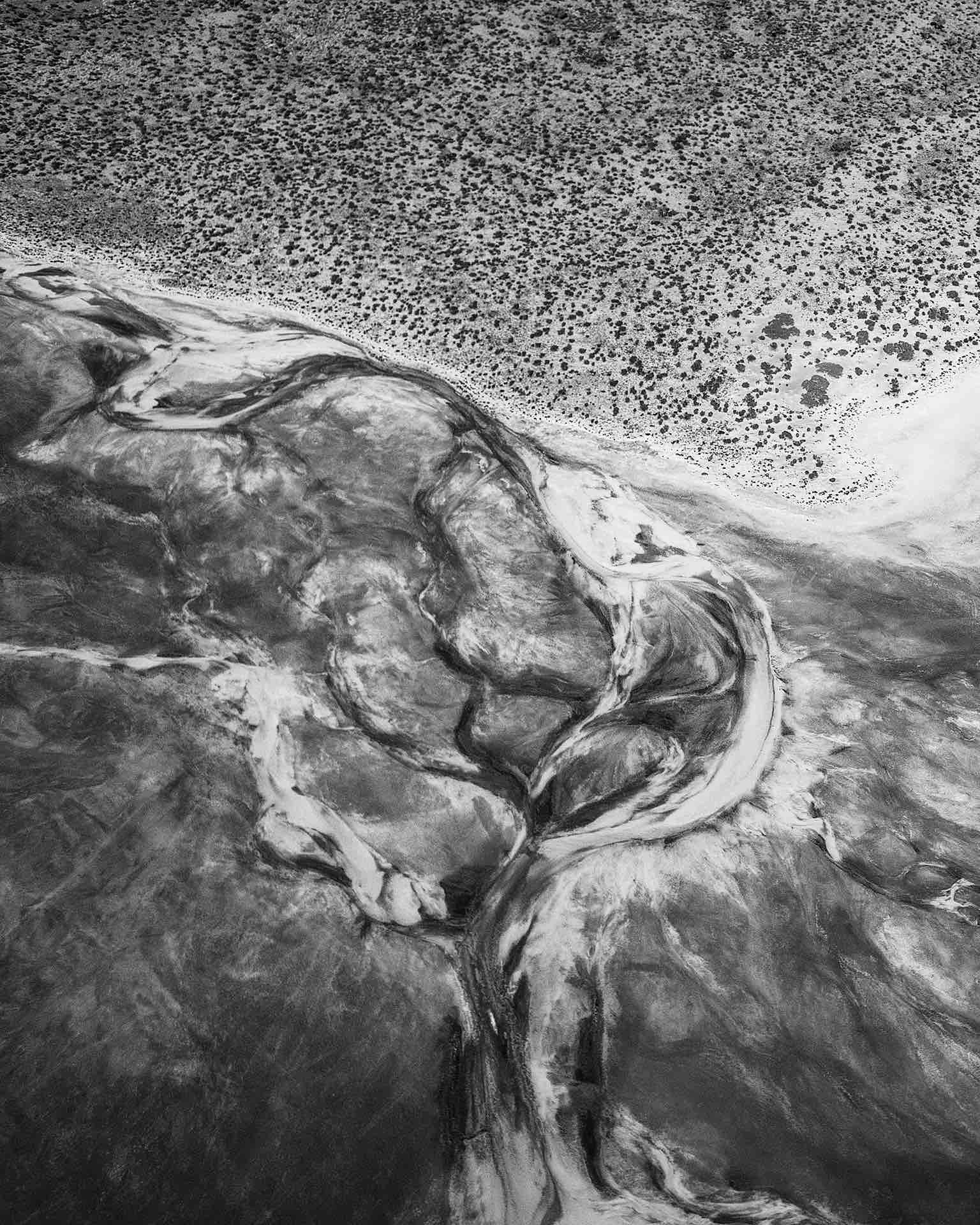 Salt Tree - Helen Christie