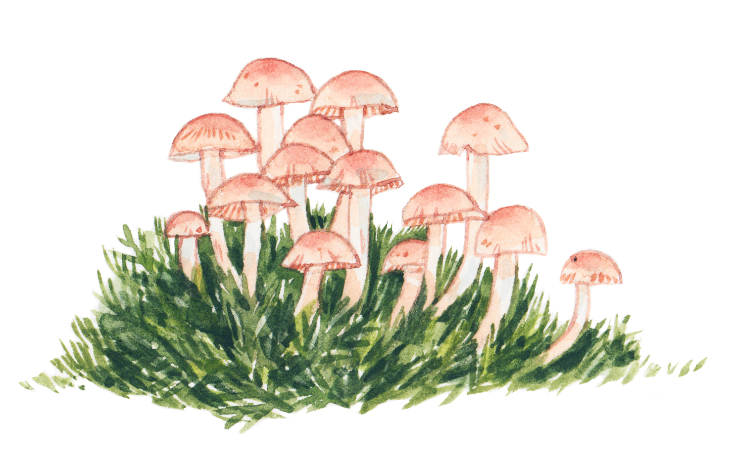 Justine-Wong-Illustration-Food-Mushrooms.jpg