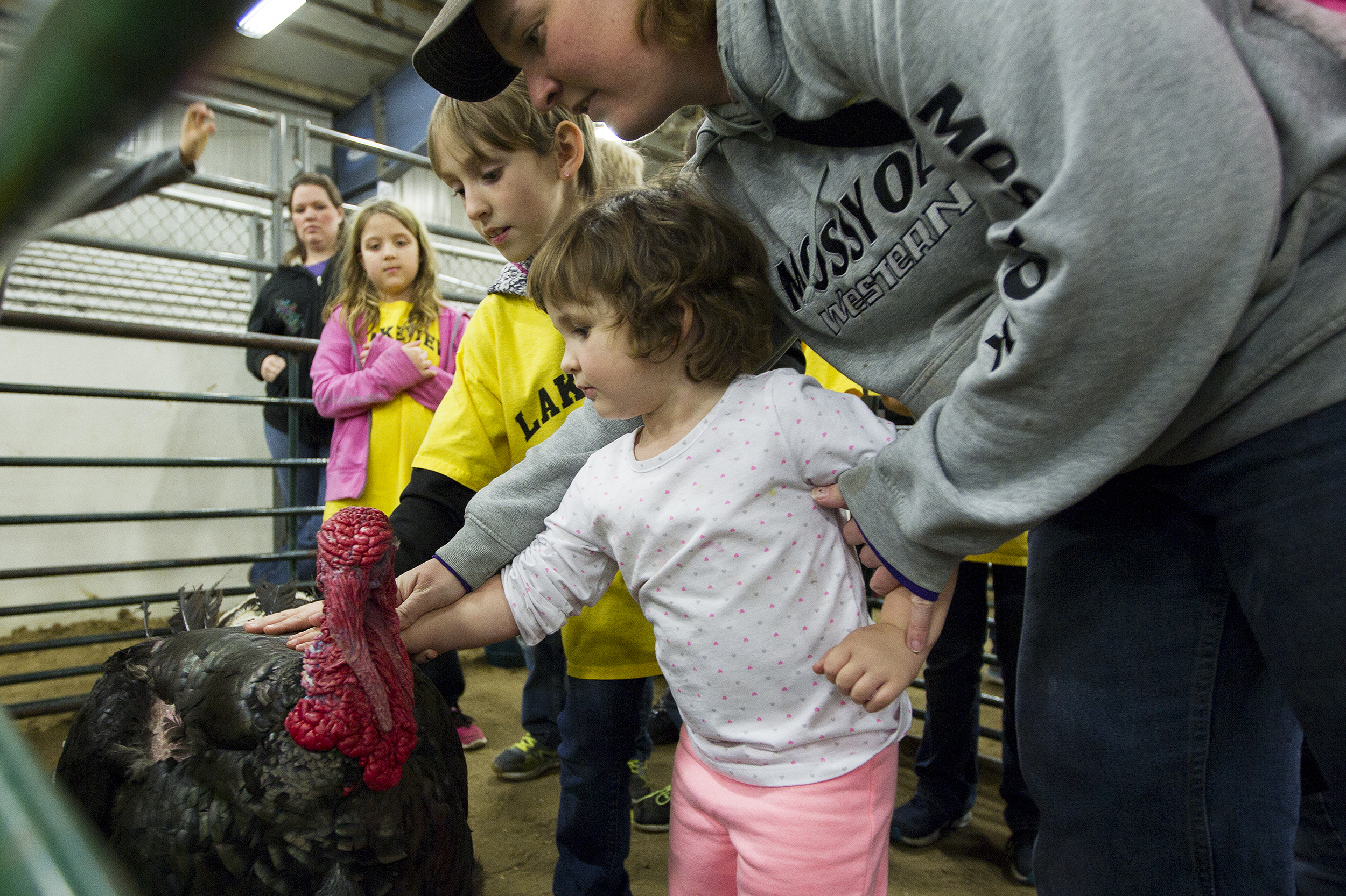 "Kelby Biley, 3, pets a turkey at the annual Campbell County Conservation District's Agriculture and Natural Resources Expo Tuesday afternoon at the Cam-plex East Pavillon. Third graders from around the district came to Cam-plex to learn about the agriculture industry, ""I love being with the kids and teaching them about ag,"" said Wright Future Farmers of American member Adrienne Mackenzie, ""I think that's something not enough kids get exposed to."""
