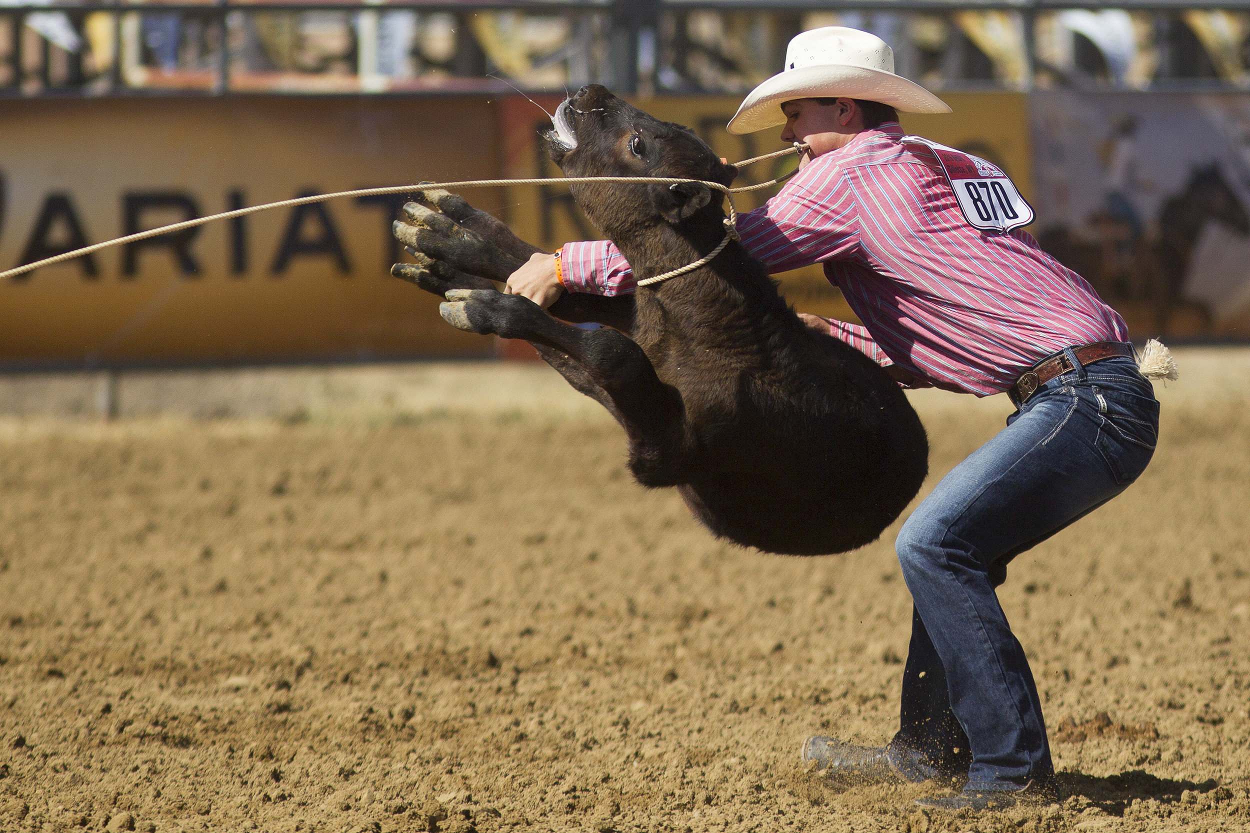 Chase Thrasher of Columbia, Tennessee, flips his calf during his tie-down roping run Monday morning in the second performance of the National High School Finals Rodeo at Morningside Park on July 18, 2016.