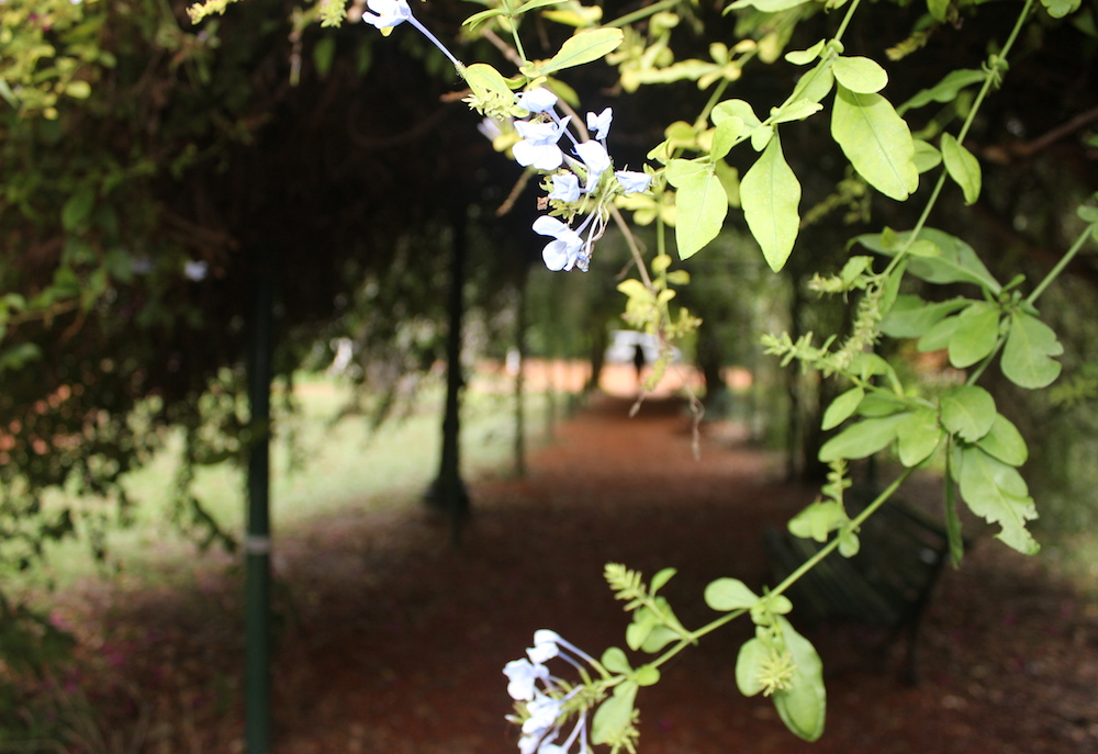 Carlos Thays Botanical Garden | Photo credit: Rose Spaziani