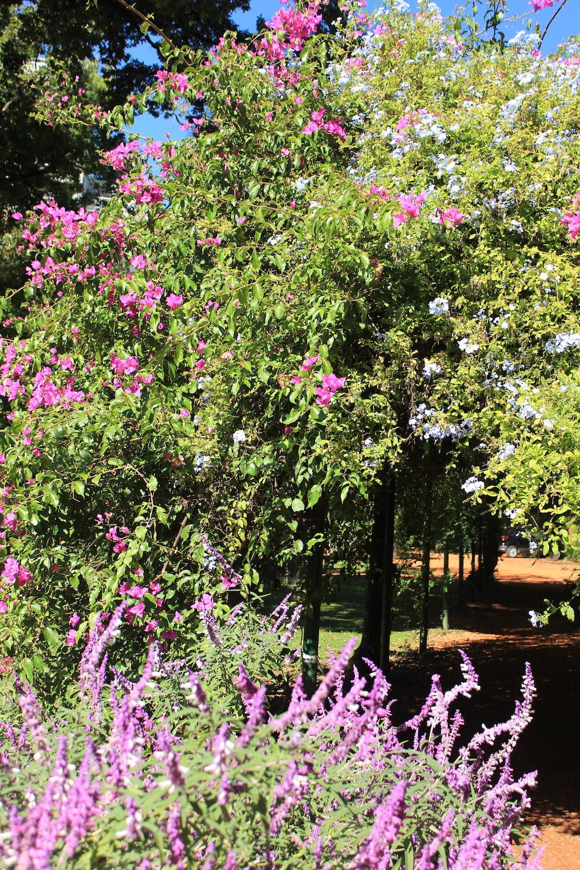 Entrance to a pergola,Carlos Thays Botanical Garden | Photo credit: Rose Spaziani