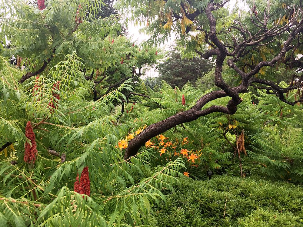 Wild garden at Wave Hill, Bronx, N.Y. | Photo credit: Rose Spaziani