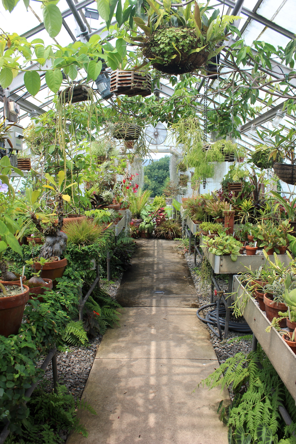 Marco Polo Stufano Conservatory at Wave Hill, Bronx, N.Y. | Photo credit: Rose Spaziani