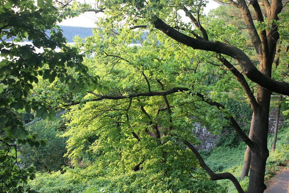 Cabrini Woods Nature Sanctuary, NYC | Photo credit: Rose Spaziani