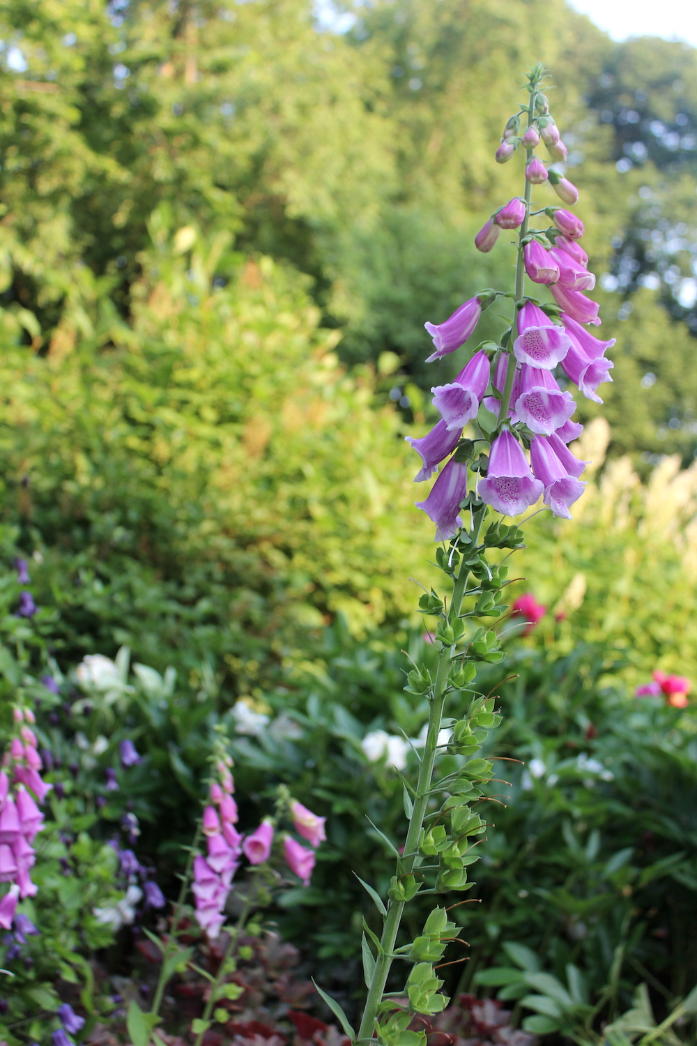 Heather Garden in Fort Tryon Park, NYC | Photo credit: Rose Spaziani