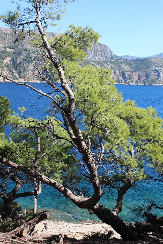Trees on Lokrum island near Dubrovnik, Croatia   Photo credit: Rose Spaziani