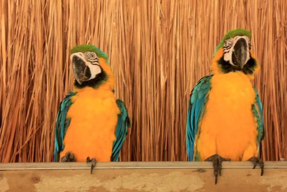 Birds at Aviario Nacional de Colombia | Photo credit: Rose Spaziani