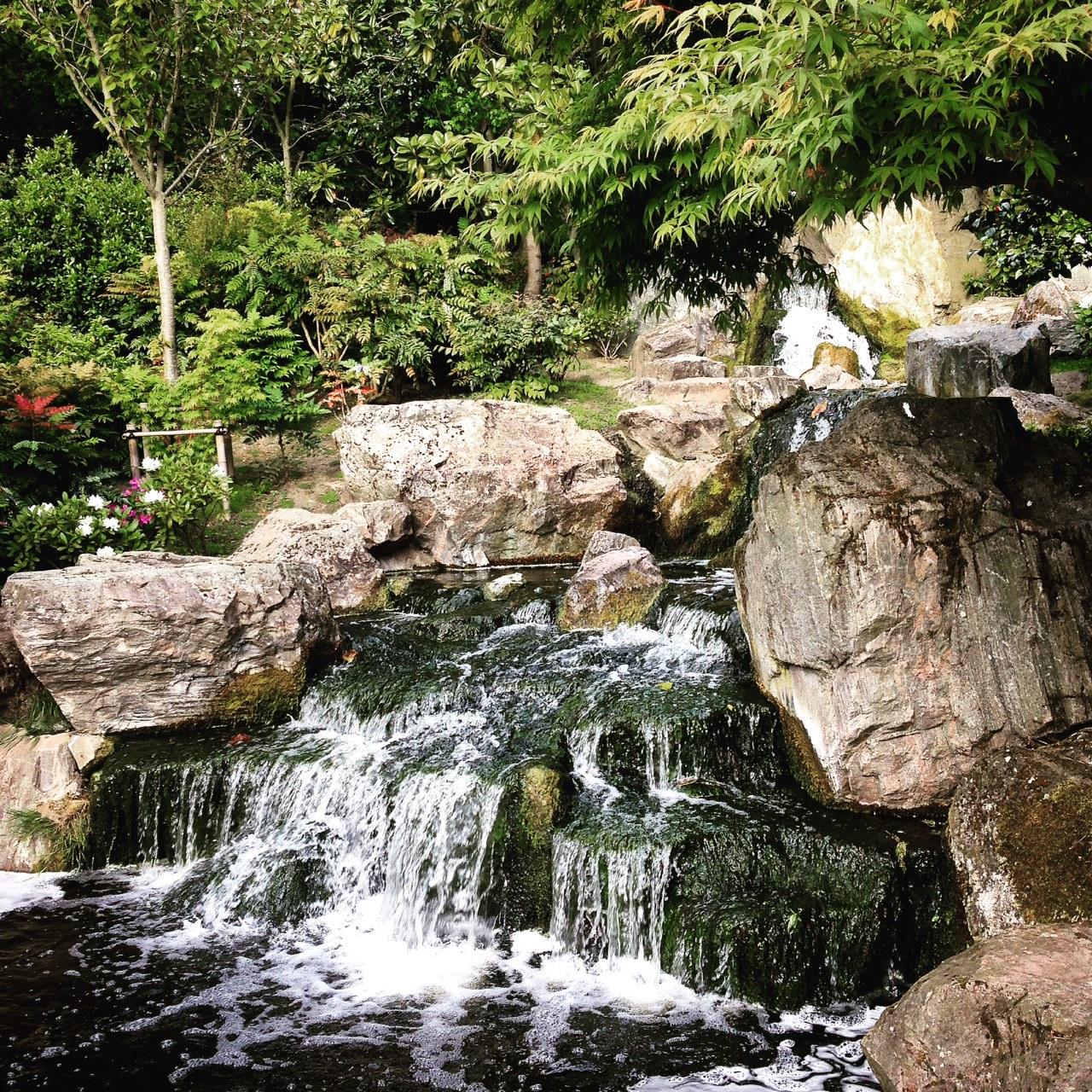 Kyoto gardens - Holland gardens London