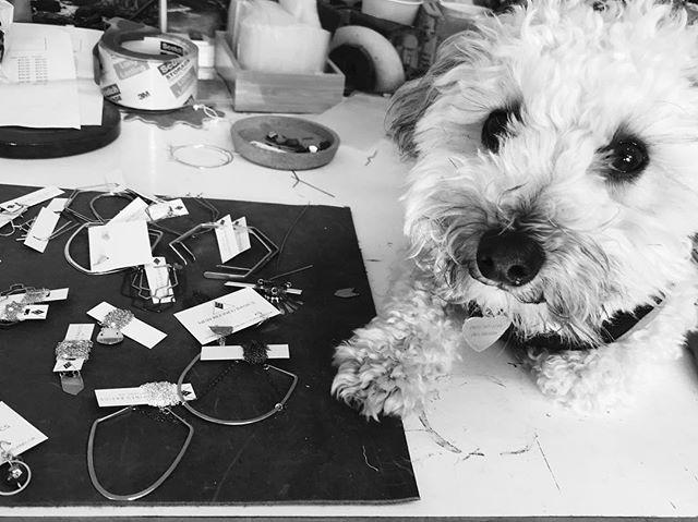 Studio assistant 🐶
