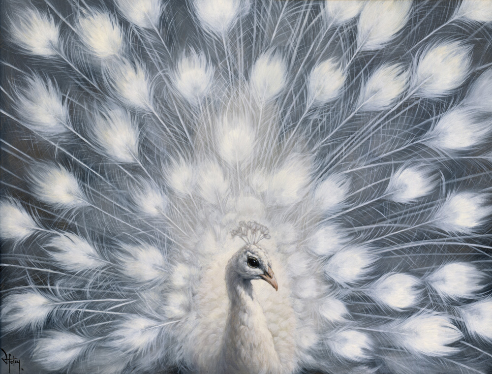 whitepeacockweb.jpg