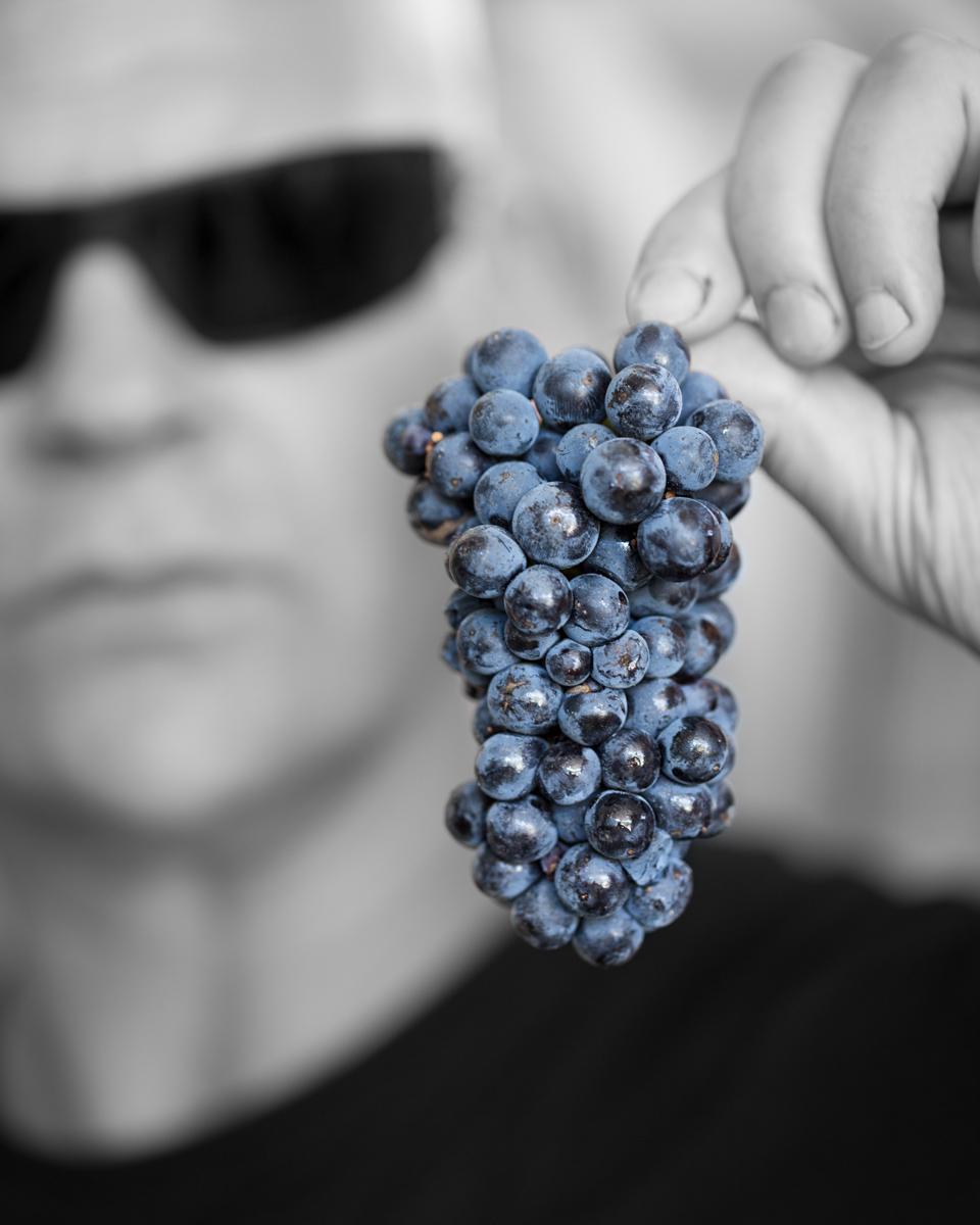 Pinot Noir Hal Schmitt