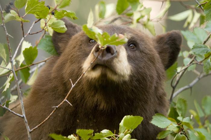 blackbearhawthorn.jpg
