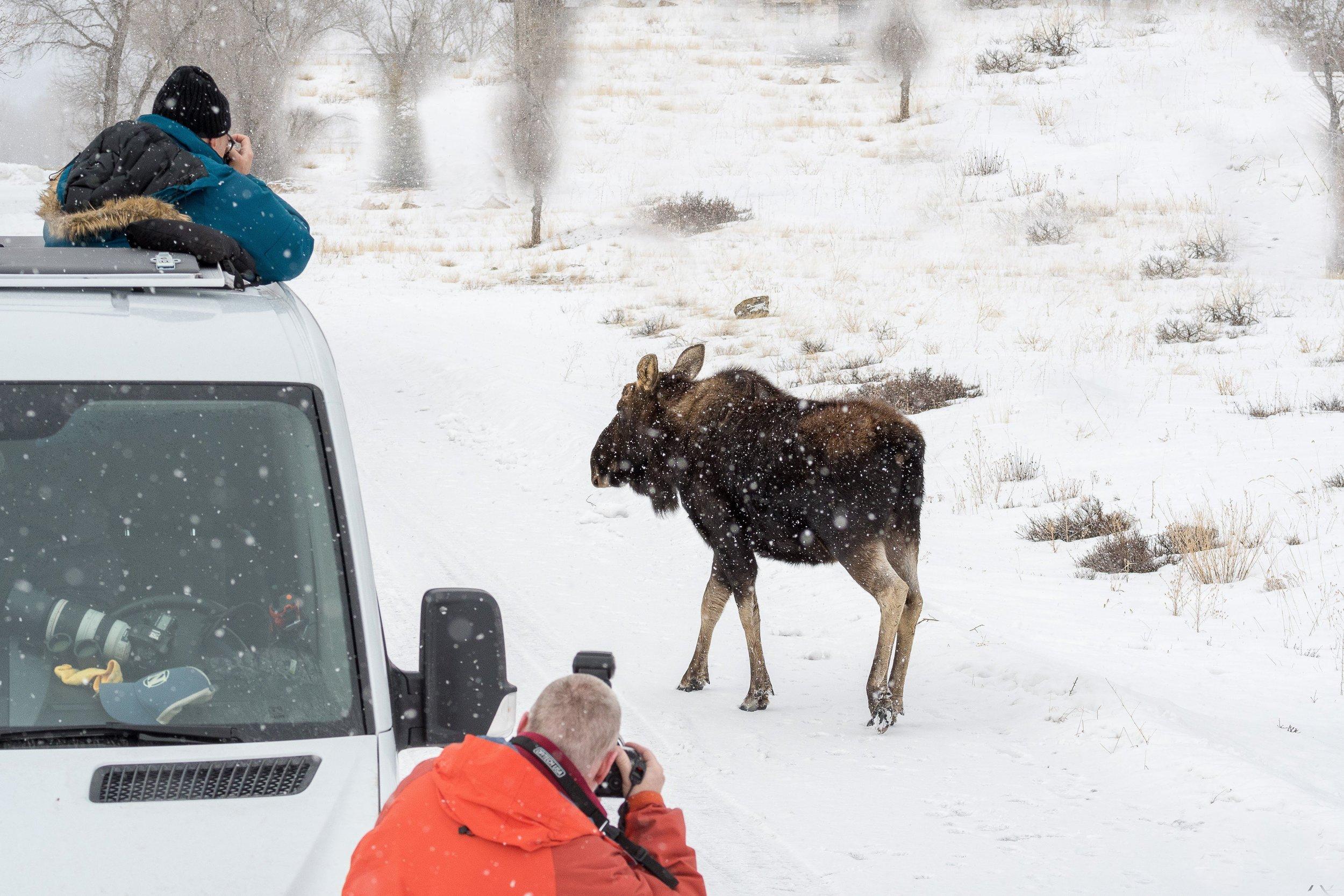sprinters and moose.jpg