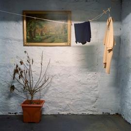 "untitled 34 (dead plant),  2011  sin título 34 (planta muerta),  2011 Digital C-type Print 16"" x 16"" Edition of 6 (+ 2 AP) $900"