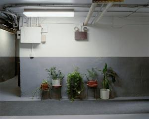 "untitled 9 (plants),  2011  sin título 9 (plantas),  2011 Digital C-type Print 20"" x 16"" Edition of 6 (+ 2 AP) $1,000"