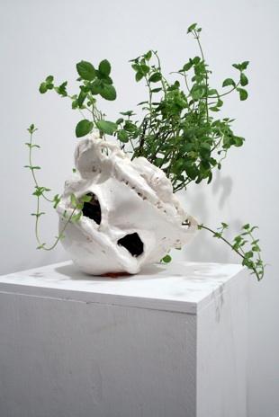 """David Herbert   Winterfresh  Ceramic, mint bush, and blue tac, 13x12x12"""" plus plant $3,000"""