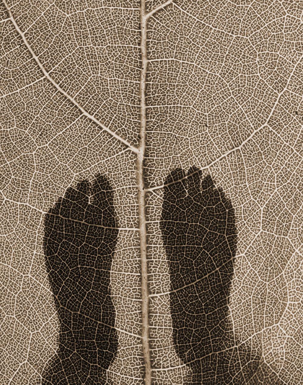 "Ron Saunders , Brown Feet Leaf,  2012, Photograph, 25 x 29"""