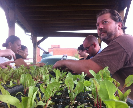 "Councilmember Grosso and Team Grosso transplanting ""dinosaur"" kale at the Farm at Walker Jones in NW Washington, D.C."