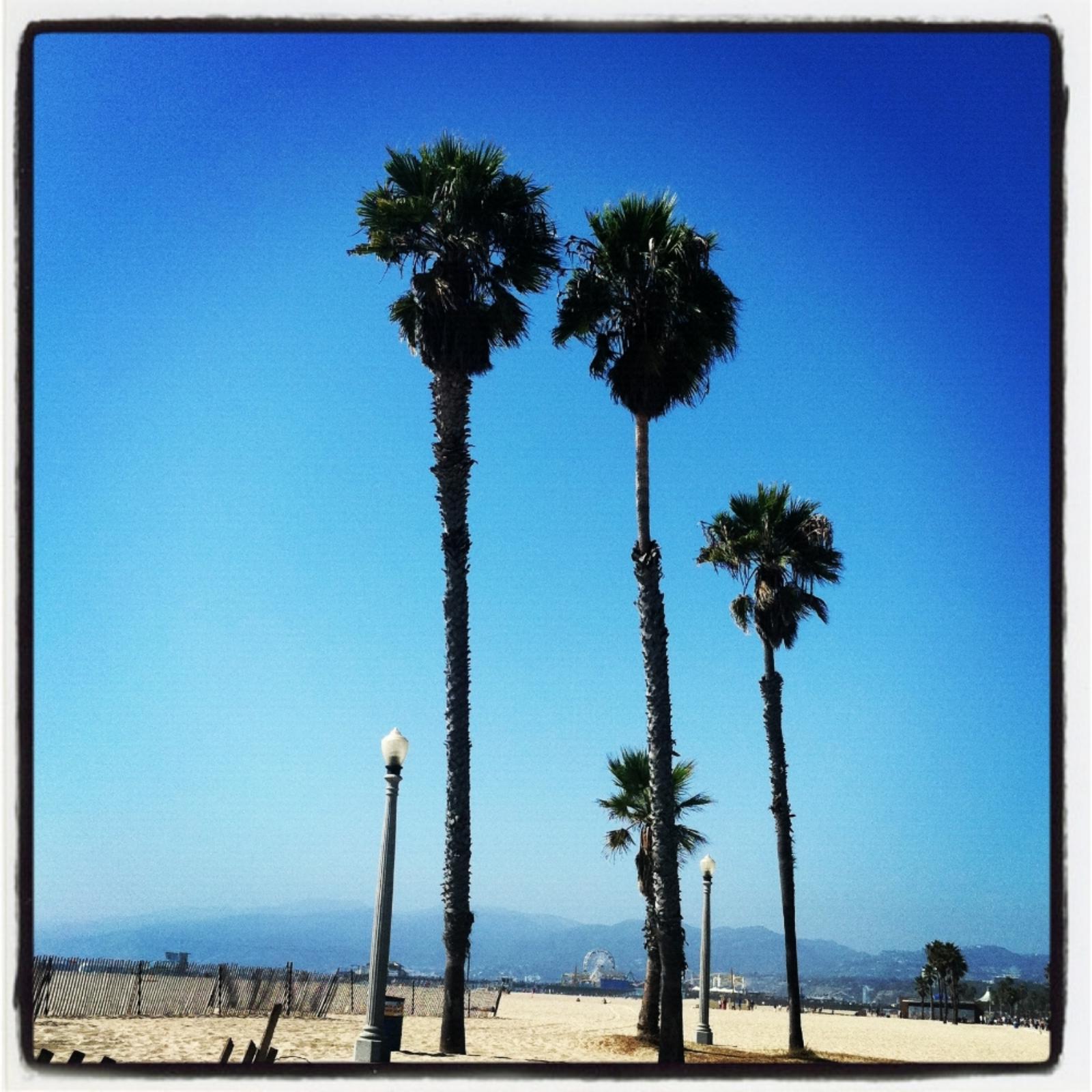 Palms Whisper
