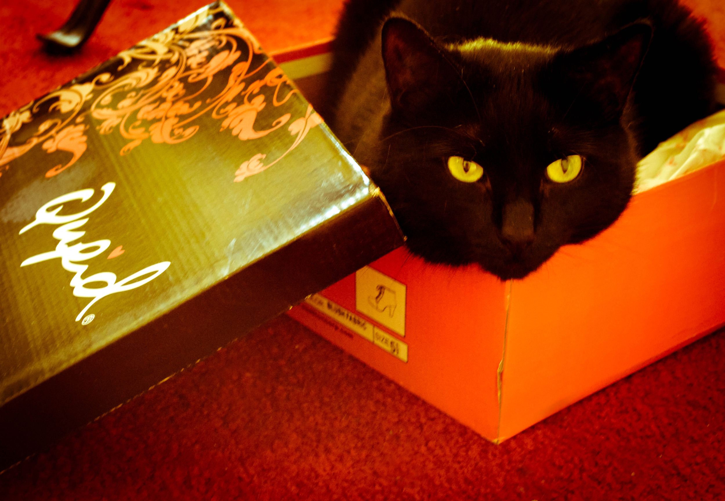 Ms. Lilli in her vegan boot box.