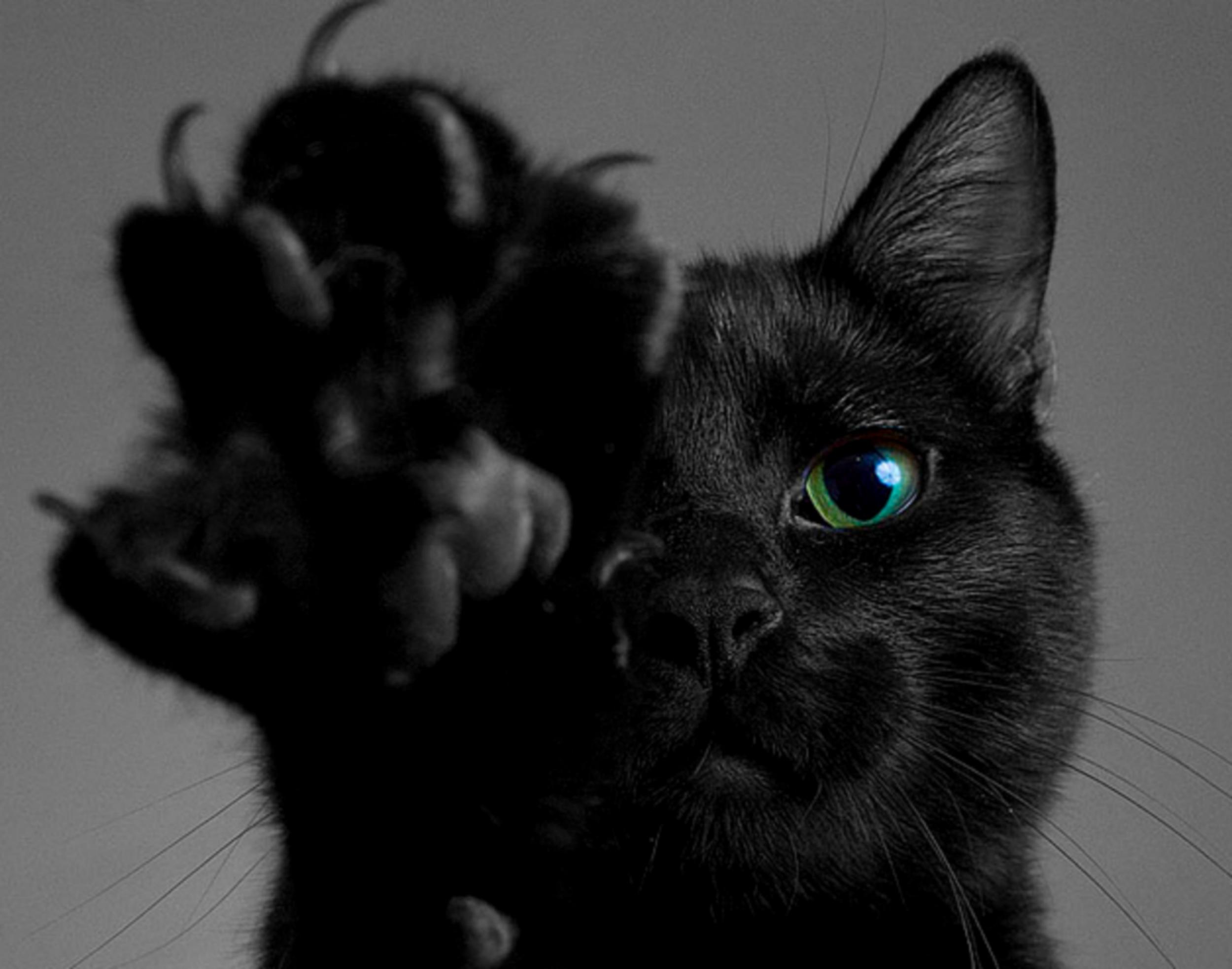 Cat Totem