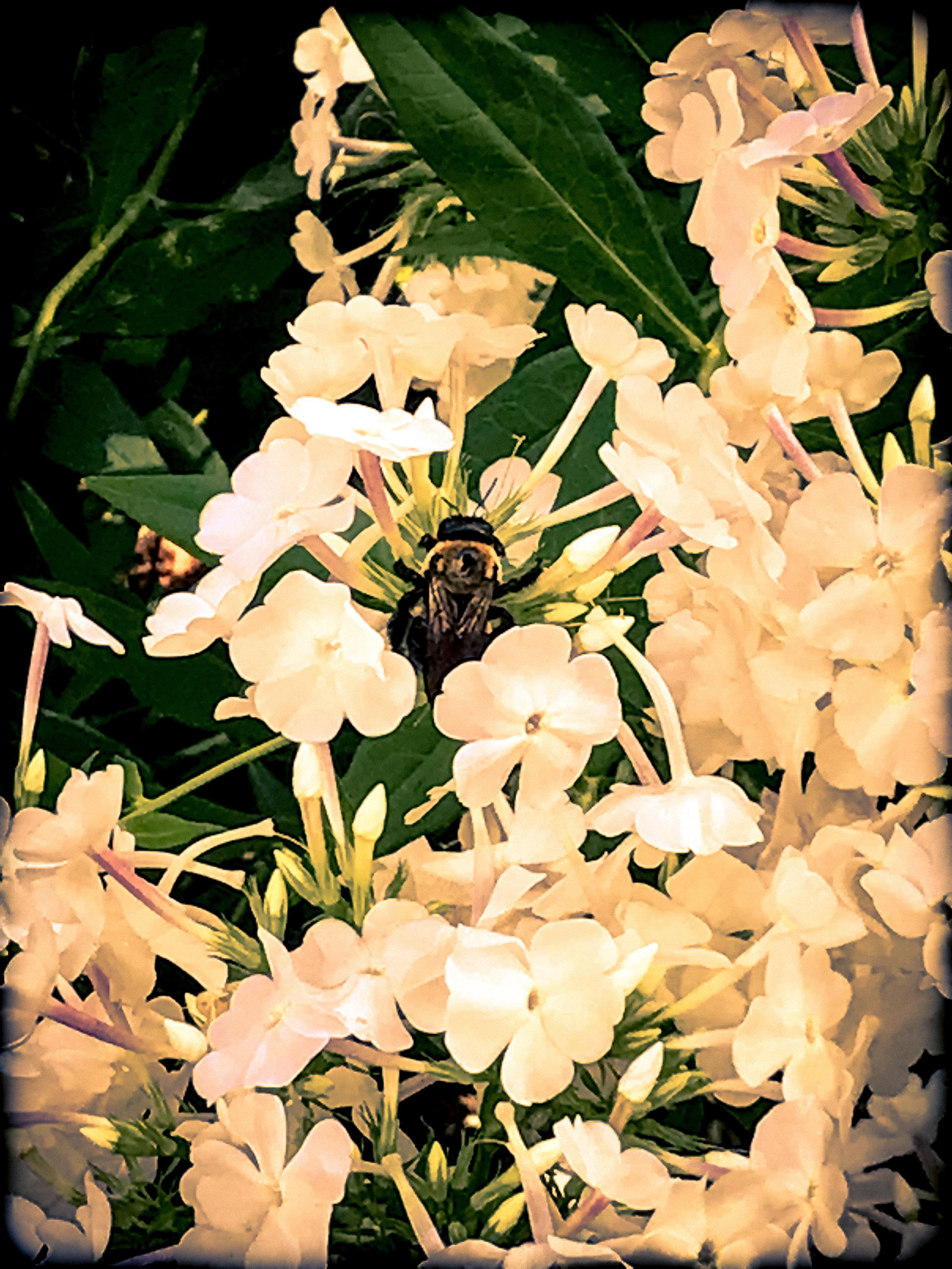 Zen Bee
