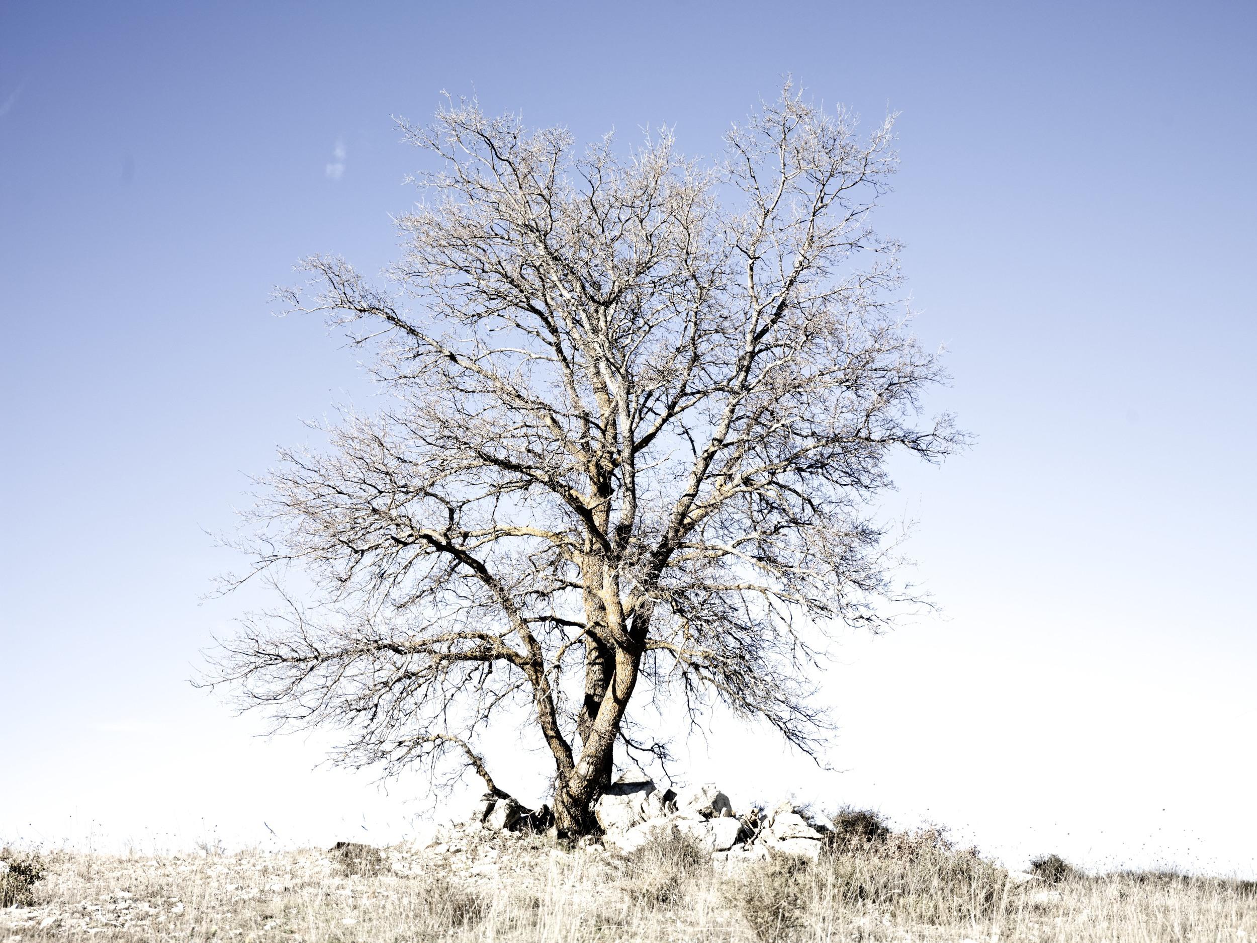 TREE, MADRID