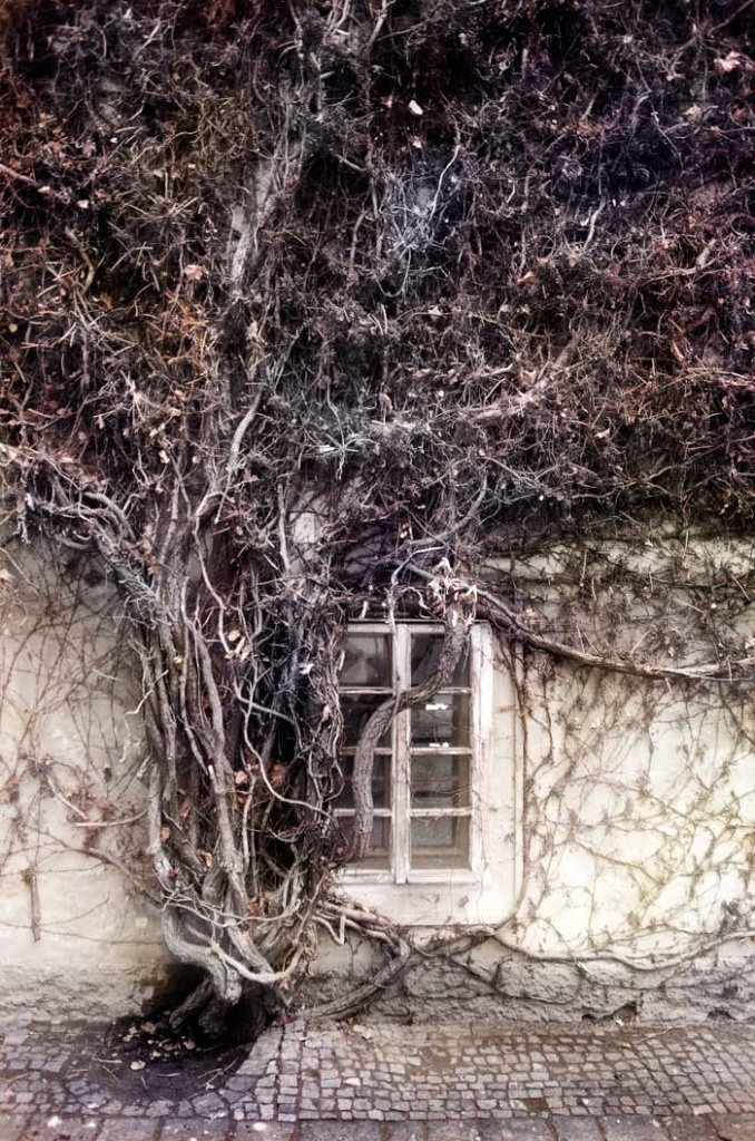 WINDOW, PRAGA