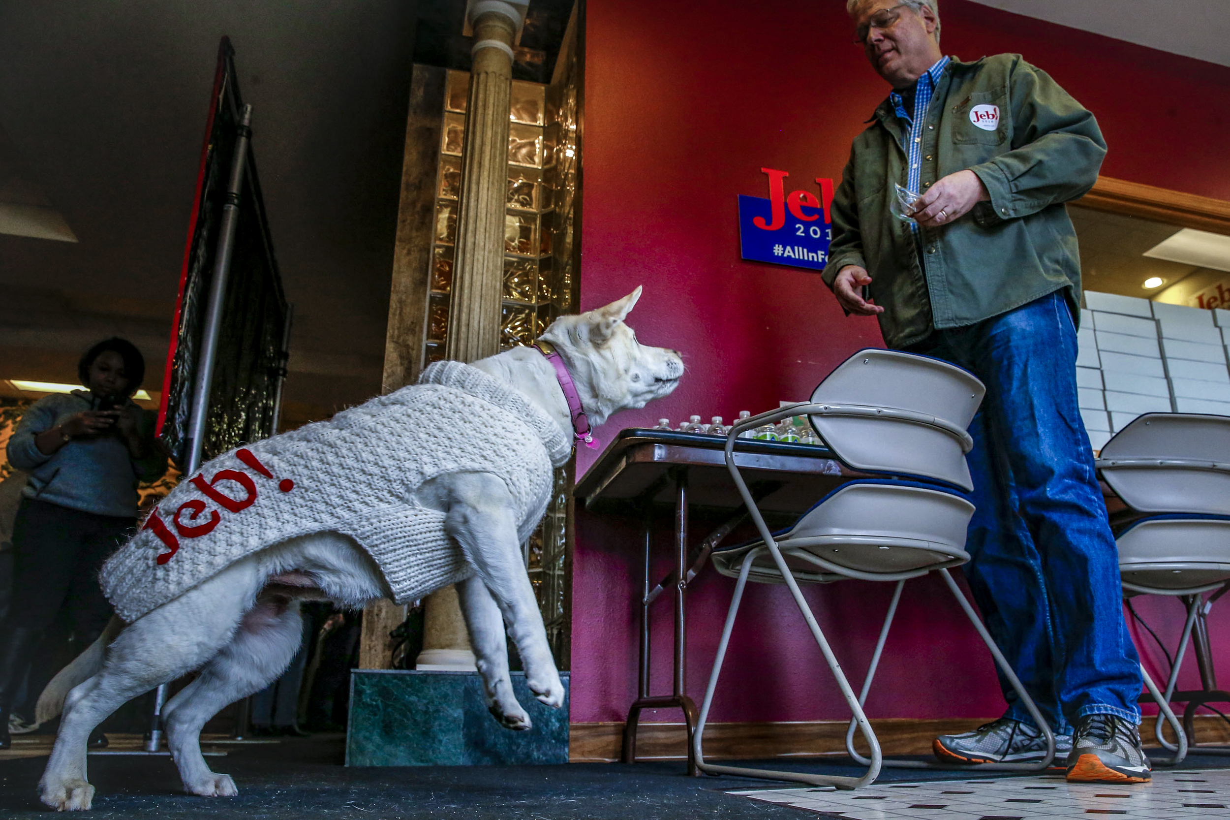 Volunteer Mark Rovinski of Springfield, Pennsylvania tosses a bacon treat for his yellow lab, Halley, before an event for presidential candidate Jeb Bush at the campaign's Cedar Rapids, Iowa, field office, Sunday, Jan. 31, 2016. The former Florida Governor made the stop in Cedar Rapids to deliver a brief speech and meet potential caucus goes the day before the Iowa Caucus.