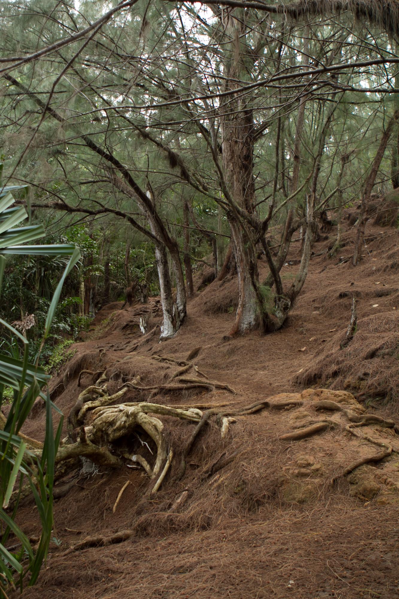 Kauai-3.jpg