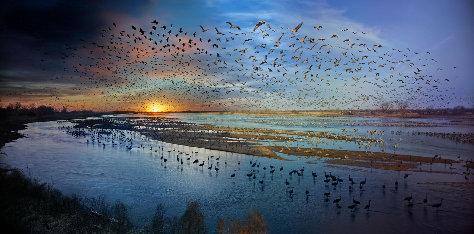 Epic Bird Migrations - Feature in National Geographic Magazine