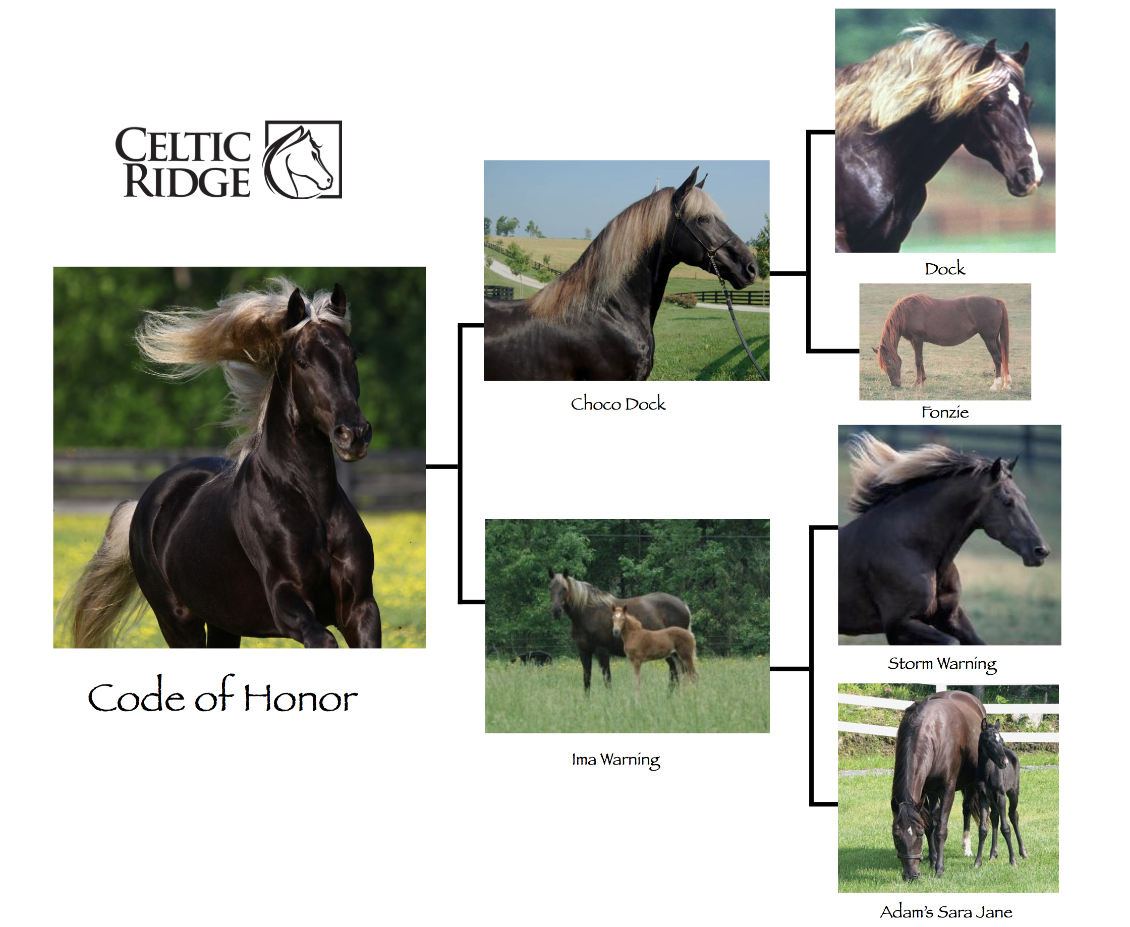 Code of Honor's Pedigree