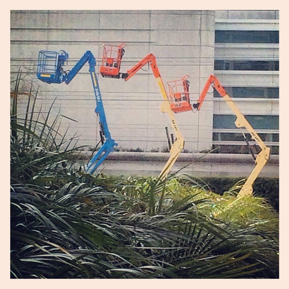 wild cranes.jpg