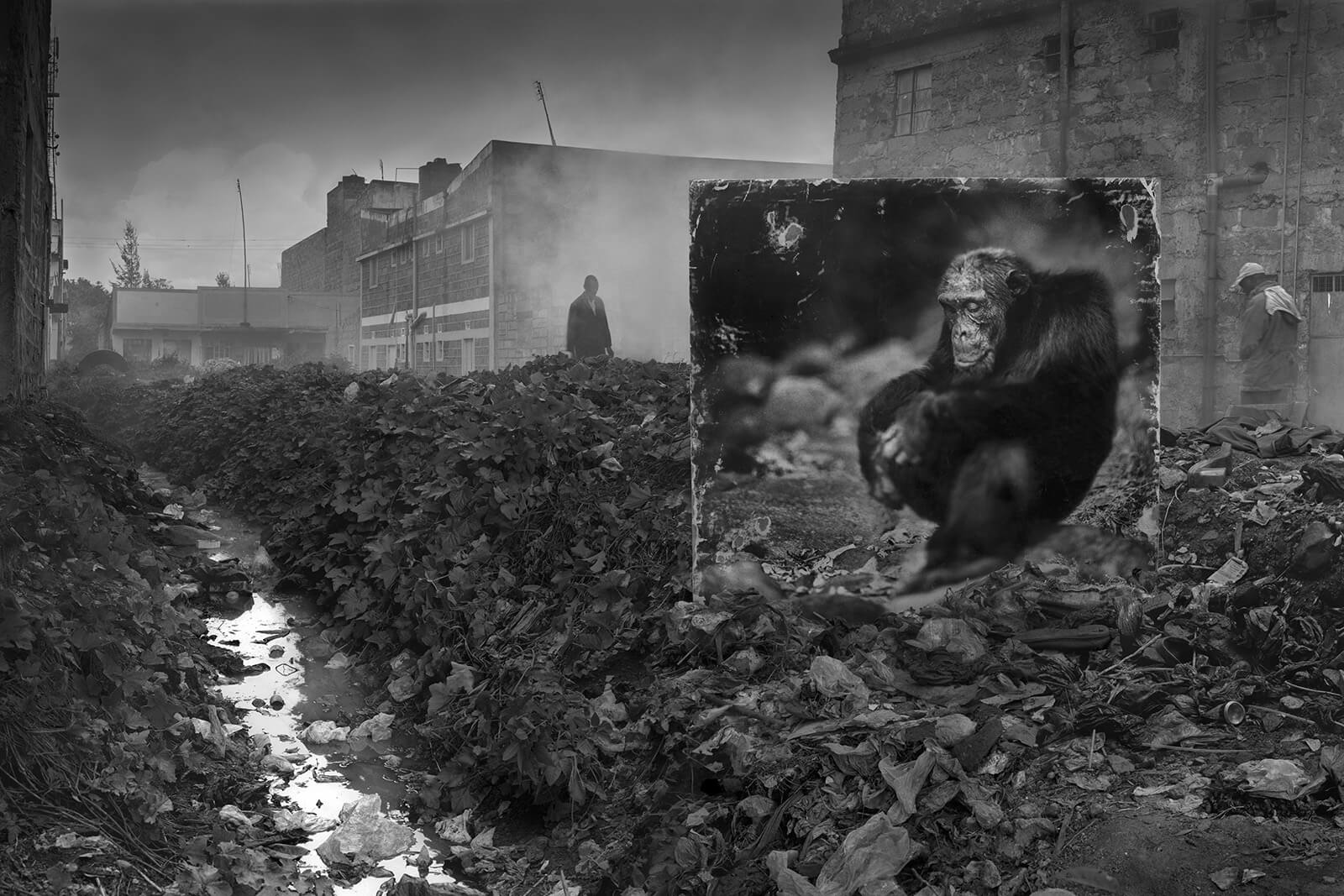 Alleyway with Chimpanzee (Photo by Nick Brandt)