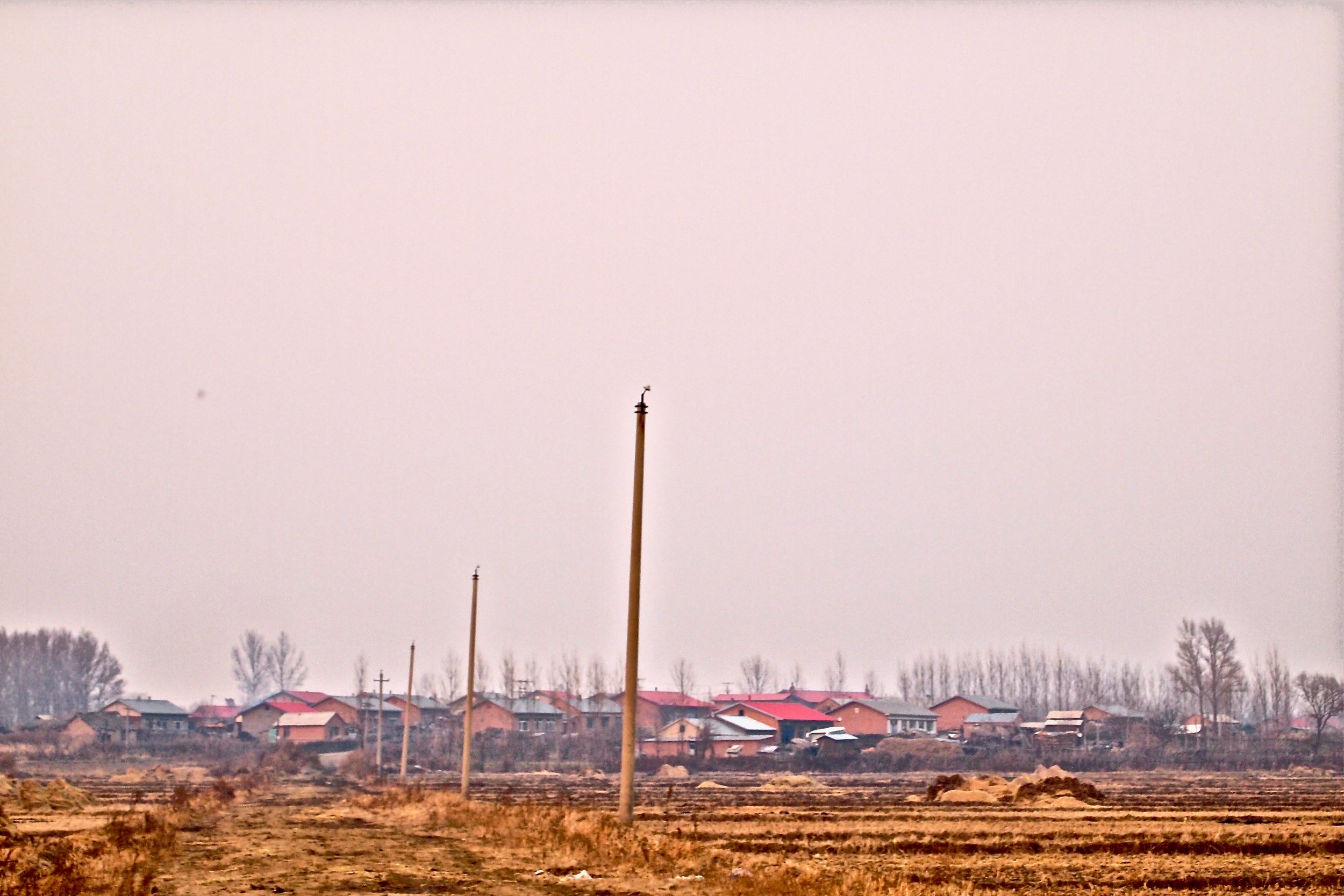 Poles from which the government cut power lines leading to Qinglongshan in Heilongjiang province, China. (C) Remko Tanis